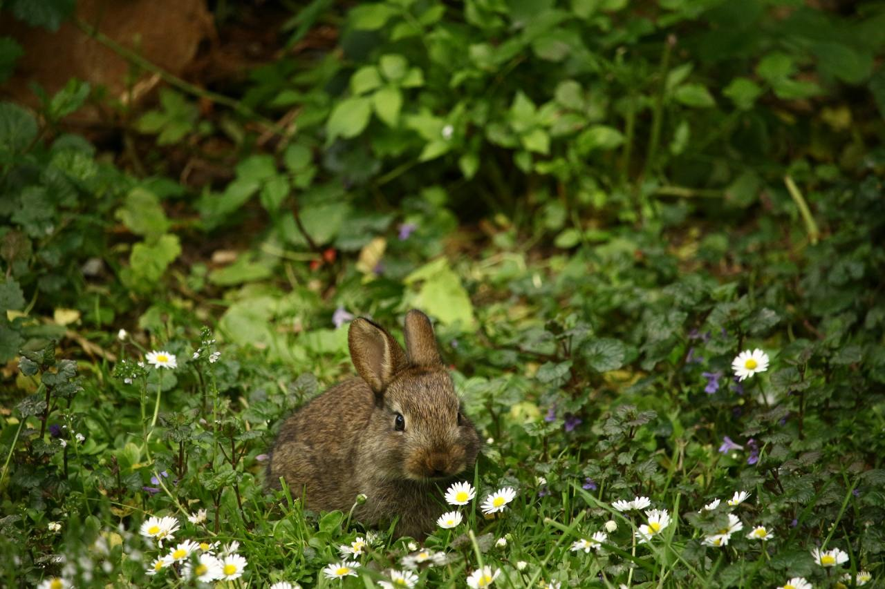 rabbit are cute when they are not eating this mama writers plants!