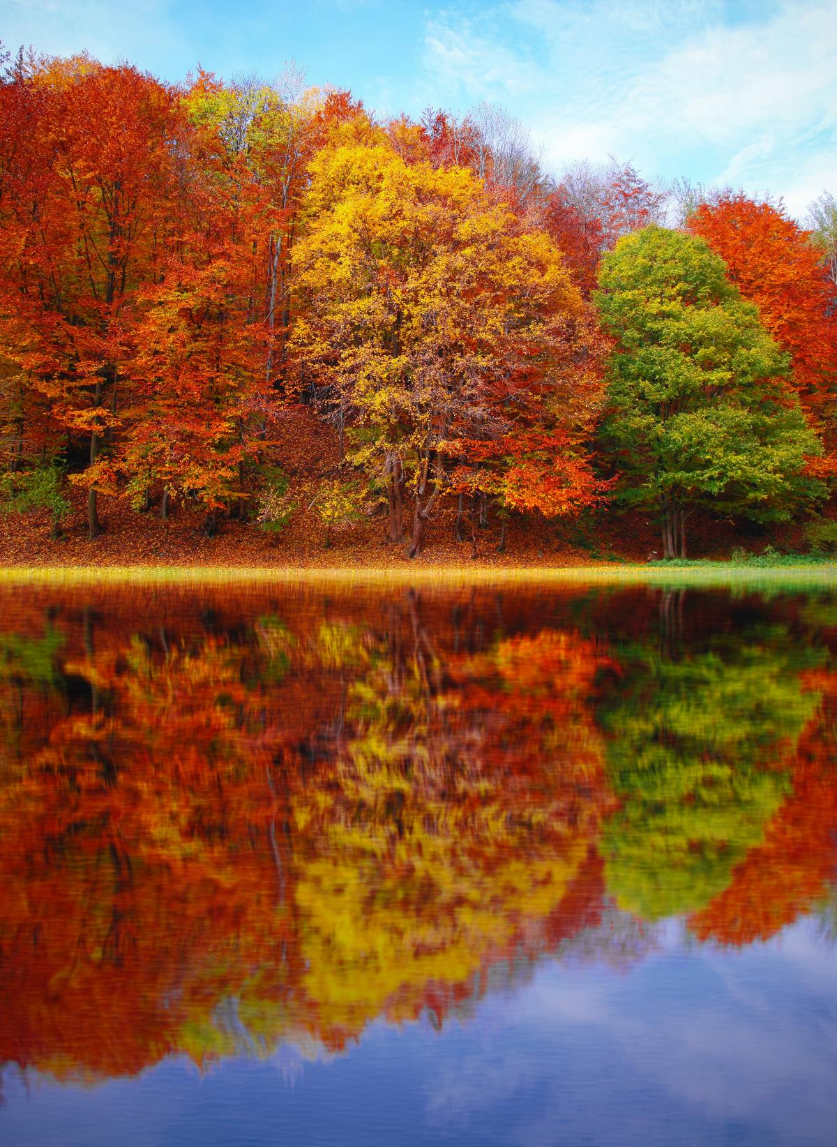 Fall and StorySparkles